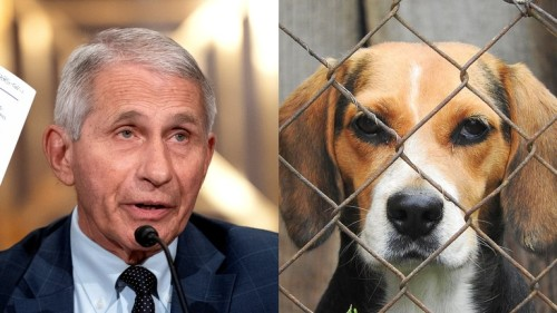 Fauci under fire from lawmakers after reports of US taxpayer money spent on cruel drug experiments on dogs